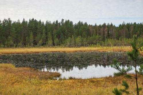 suomi finland pond woods hiking path route metsä kuni lampi vaellus polku reitti ostrobothnia korsholm