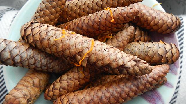 Pine Cones 004