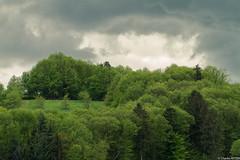 Forêt Noire (2)