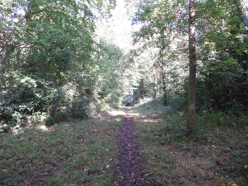 Marks Hill Nature Reserve, Path (II)