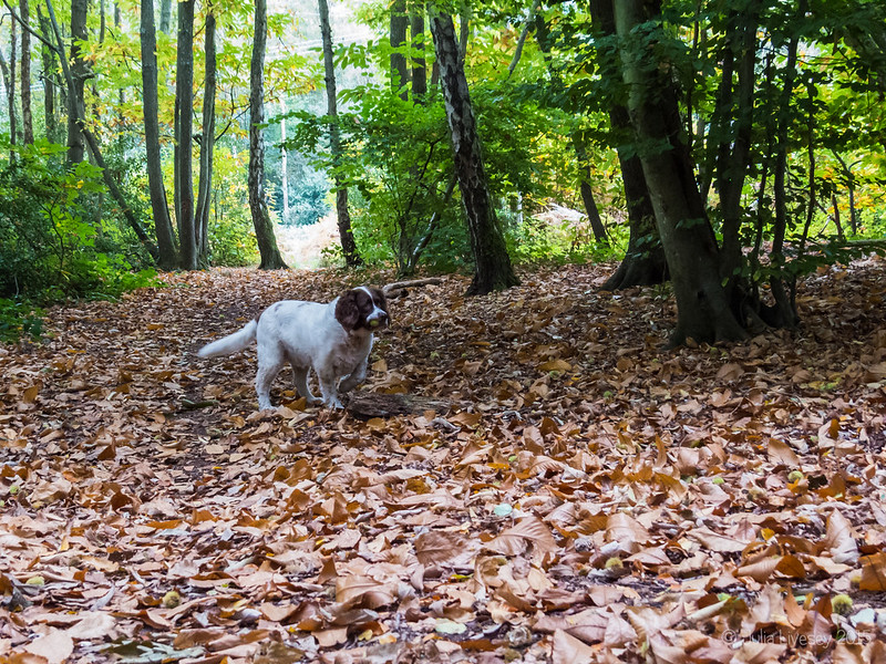 Max goes in search of sweet chestnuts