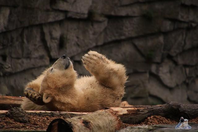 Tierpark Berlin 22.11.2015   038