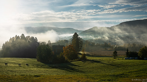 morning autumn light food sun mist green eye norway misty fog backlight sunrise landscape see sheep foggy meadow running run buskerud d810 skollenborg nikonafsnikkor50mmf14g eyeseelightphotographyronjansen