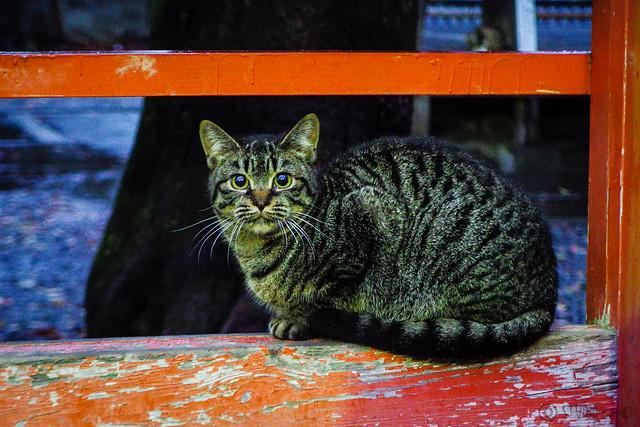 Today's Cat@2015-12-03