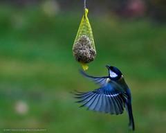 Vögel - diverse