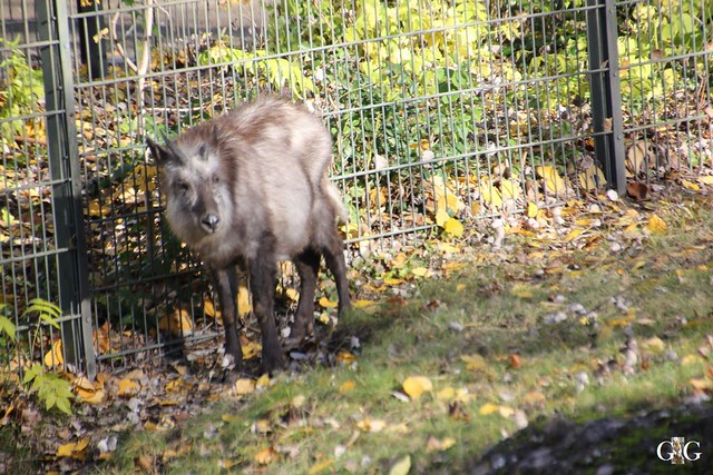 Zoo Besuch 08.11.2015648