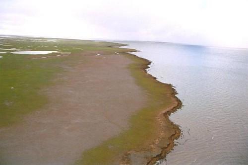 Ellice Island, Mackenzie Delta