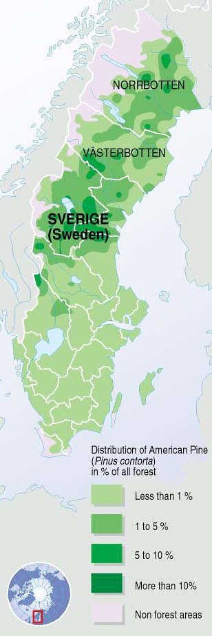 Distribution Of Lodgepole Pine In Sweden GRIDArendal - Sweden forest map