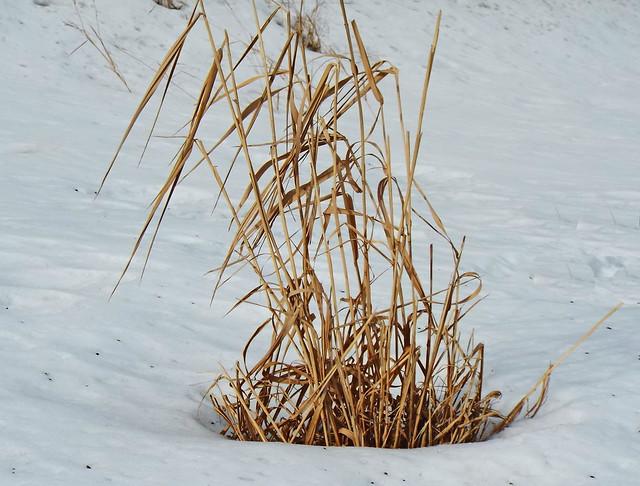 Nature In The Snow, Fujifilm FinePix S9800 S9850 S9750