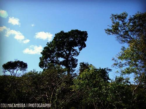 Parque Estadual das Sete Passagens - Miguel Calmon - Bahia - Brasil   #tree #arvore #flora #nature #natureza #naturezalinda #naturezaperfeita #natura #natur #natuur #bemlindanatureza #echologicpark #guzelgununkaresi #iglobal_photographers