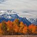 autumn - Grand Teton National Park - 10-02-09  01 by Tucapel