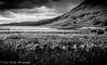 The Scottish Highlands BW-5 by broadswordcallingdannyboy