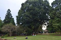 Lady Hydari Park Shillong2