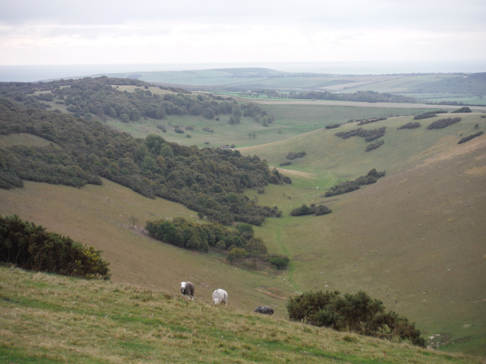 Deep Dean, near Windover Hill SWC Walk 25 - South Downs Way 8 : Southease to Eastbourne