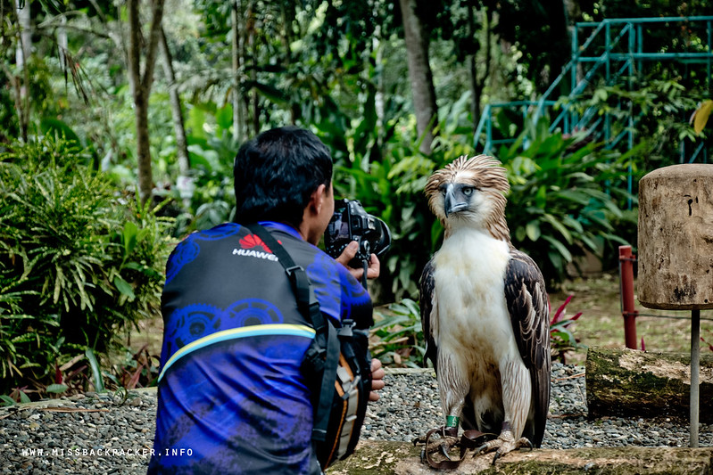 Philippine Eagle Mindanao