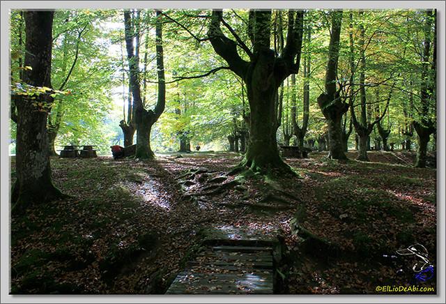 Hayedo de Presazelay (10)