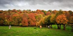 L'automne est dans le pré - Photo of Warluzel