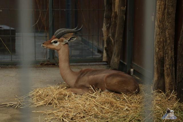 Zoo Berlin 08.11.2015  093