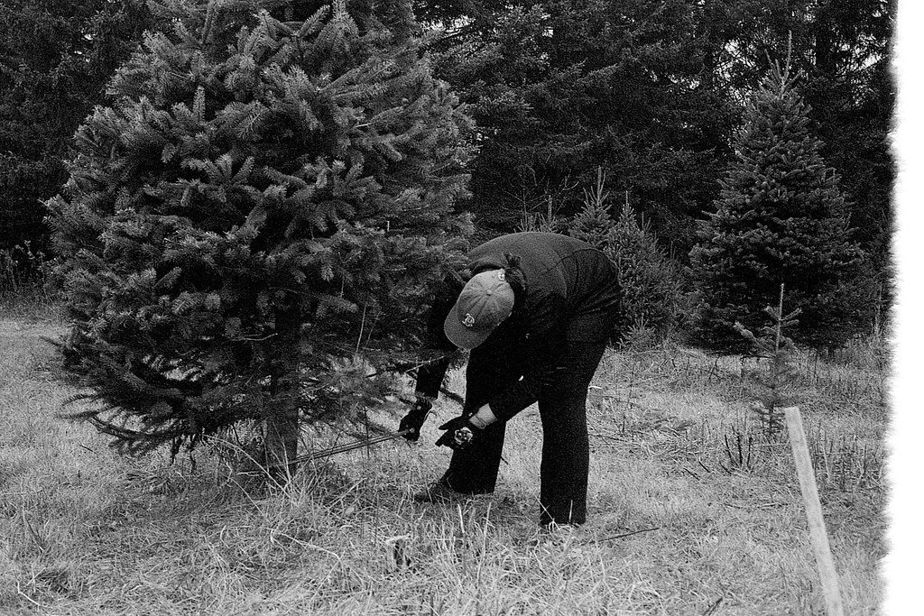Cutting the 2015 Christmas Tree