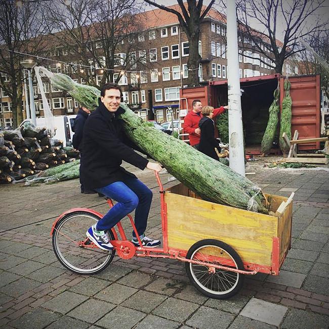 ACC_Christmas_tree