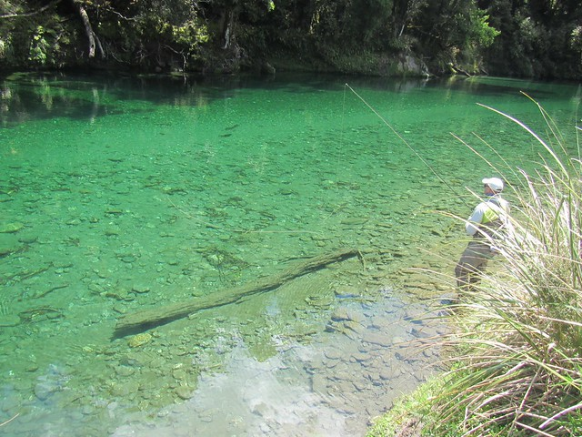 stalking brown trout in NZ
