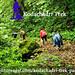 Kodachadri Trek by AdventureNest