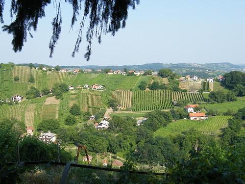 szlovénia slovenia slovenija lendava lendva tájkép landscape szőlő grape