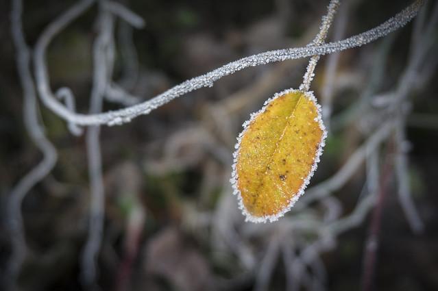 Dias de frio ll