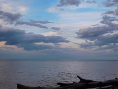 Just breathe - Lakeshore Reservation