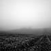 A foggy field! by 01101001 01100001 01101110