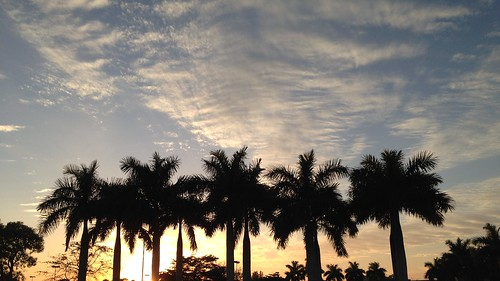 sky sunset clouds cape coral fl swfl palm tree ten 10 cirrus erkohl er kohl
