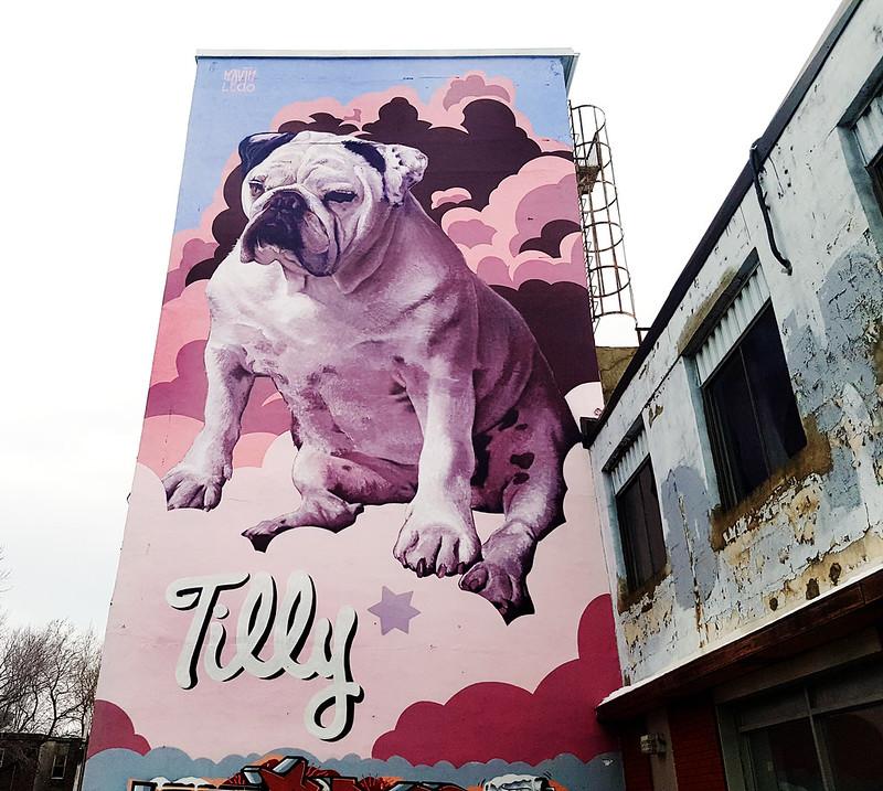 Tilly Dog - Mural by Kevin Ledo
