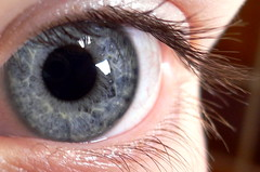 iris, vision care, brown, macro photography, eyelash, eyelash extensions, close-up, eye, organ,