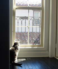 gumbo finds the sunny spot