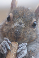 Macro Squirrel