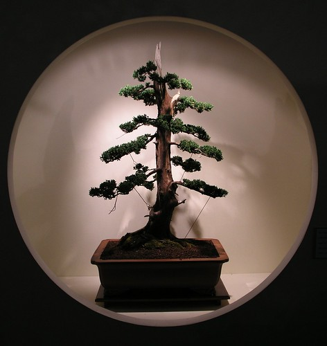 circle bonsai