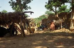 elephant(0.0), elephants and mammoths(0.0), jungle(0.0), safari(0.0), village(1.0), tribe(1.0), natural environment(1.0),