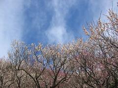 In full blossom now.
