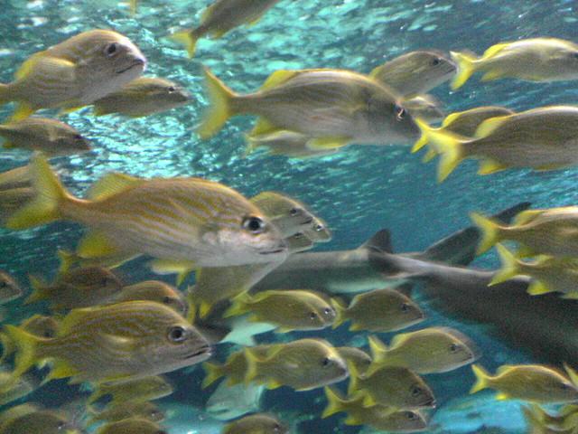 Ripley 39 S Aquarium Myrtle Beach Sc Flickr Photo Sharing