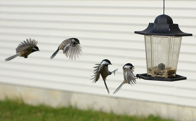 Landing Sequence