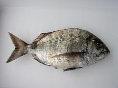 perch(0.0), forage fish(0.0), sardine(0.0), animal(1.0), fish(1.0), fish(1.0), seafood(1.0), food(1.0), red seabream(1.0),
