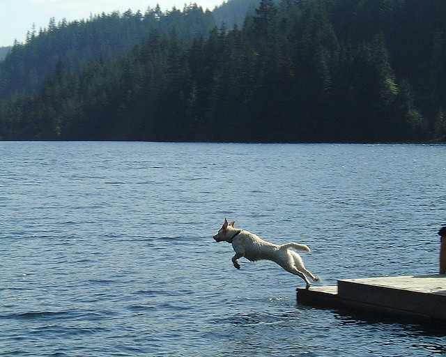 Jumping off a dock, Fujifilm MX-1700ZOOM