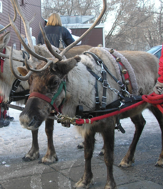 Reindeer at the Cottagewood GeneralStore