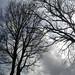 Small photo of alberi