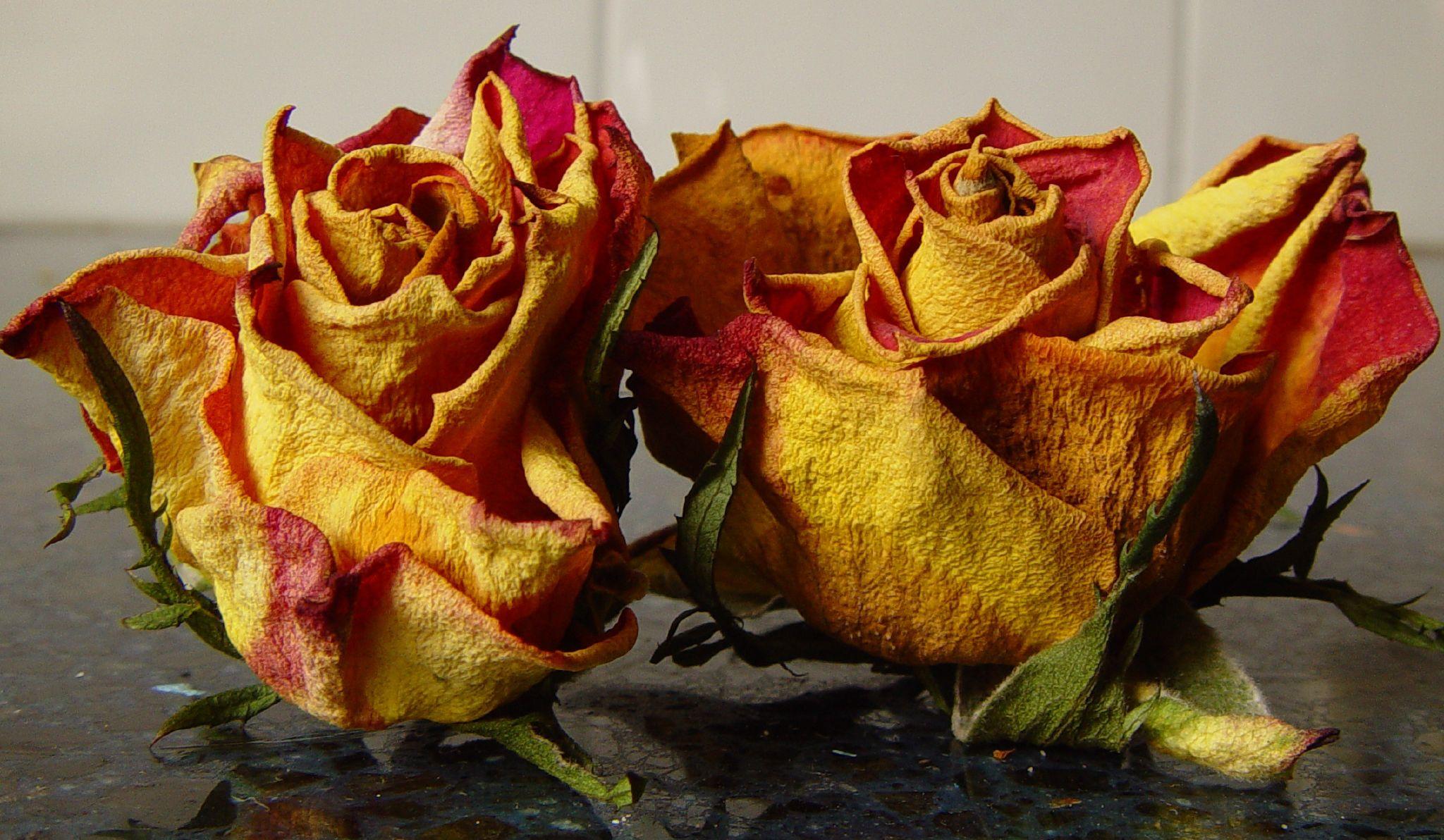 صور ورود حمراء جميلة, صور زهور جميلة, صور ورود جميل, صور ورد جميلة جدا,