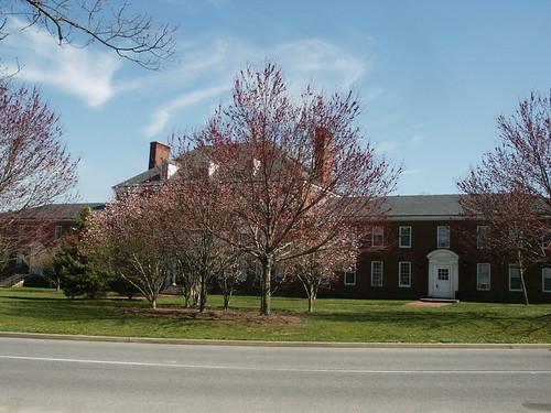 tree college campus washington spring bloom washingtoncollege