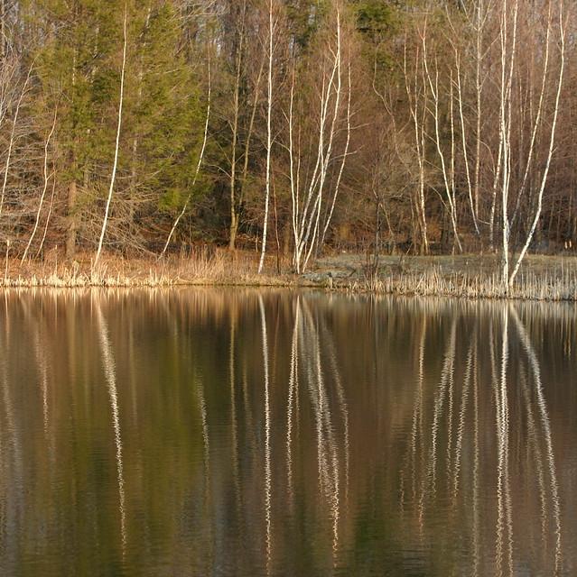 Evelyn's Pond, Spring