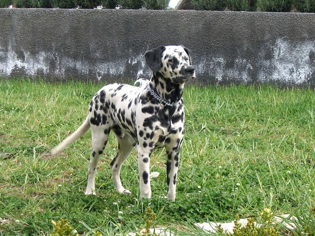 perplexed dog | Flickr - Photo Sharing!