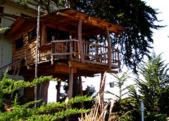 outdoor structure, hut, tree, house, log cabin, tree house,