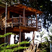 the coolest tree house